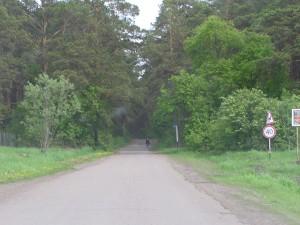 Дорога через бор