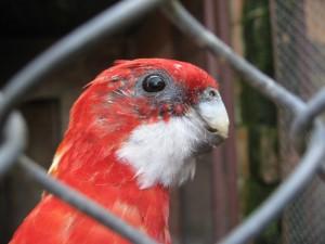 Попка попугай