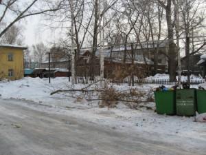 Вырубленные деревья утащили за мусорные баки
