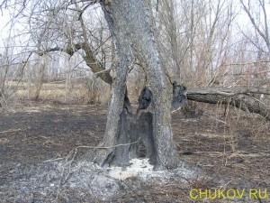 Старая талина во время пожара выгорела изнутри