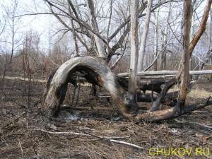 Какой-то сухостой не сгорел полностью