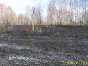 Трава с насекомыми выгорела, кусты тоже сгорели, остались лишь деревья