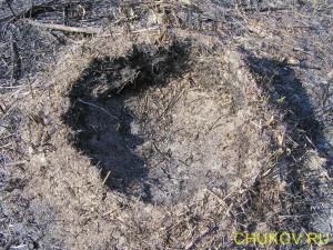 Муравейник сгорел и обрушился, но муравья спаслись в глубинах земли и теперь восстанавливают свой дом