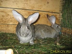 Условия обитания кроликов