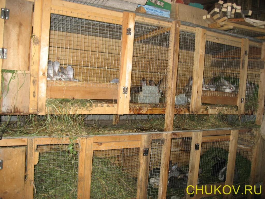 Кролик.ферма своими руками