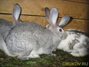 Еще кролики