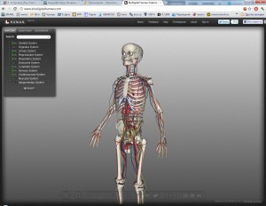Трехмерное тело (скелет) человека для изучения анатомии