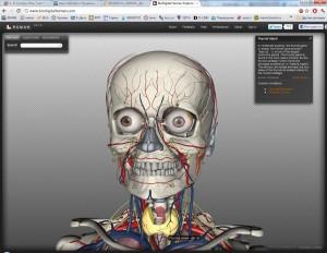 3D-модель человека для изучения анатомии