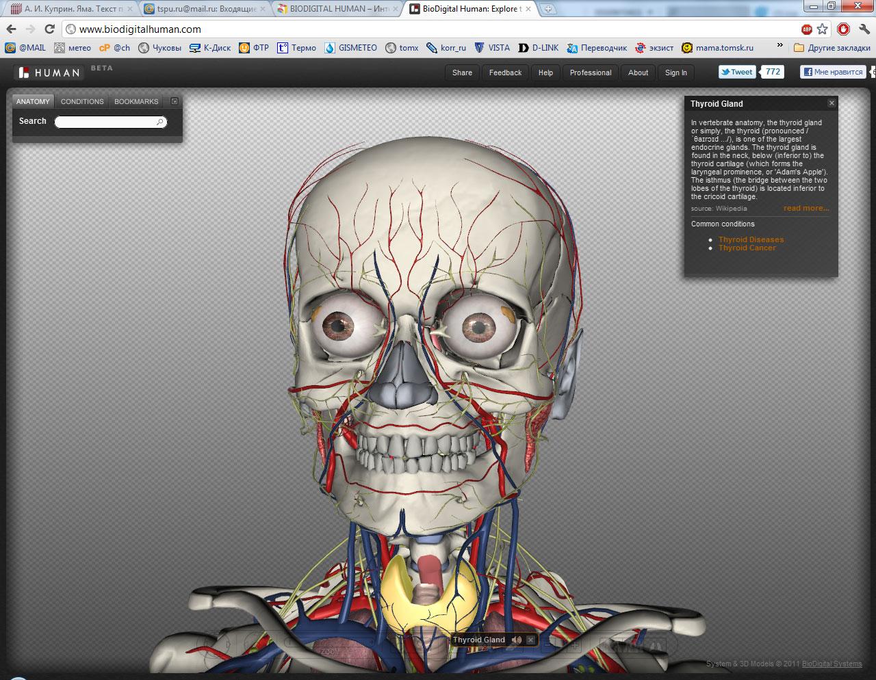 Anatomy 3d online